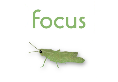 Focus Grasshopper Watercolour